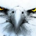 Profile picture of White eagle